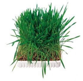 Trixie Small Animal Grass /трева за гризачи/-100гр