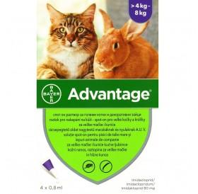 Bayer Advantage 80 Spot-On /Обезпаразитяващи Пипети За Външни Паразити При Котки И Декоративни Зайци От 4 До 8кг/-4бр