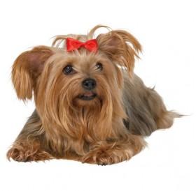 Trixie Dog Hair Bows /панделка за куче с метална закопчалка/-5см