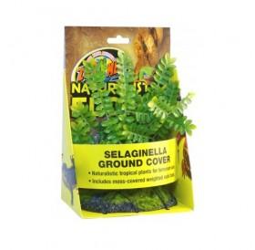 Zoo Med Naturalistic Flora Sеlaginella Graund Cover /терариумно растение с тежка основа и мъх/